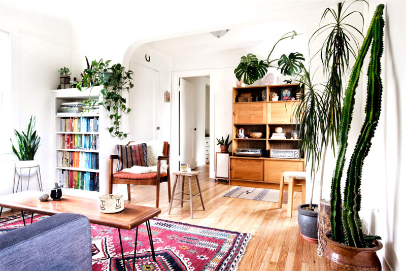 Instant Decor Upgrade House Plants