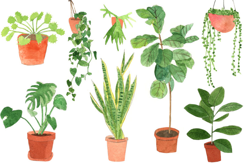an illustrated guide to house plants